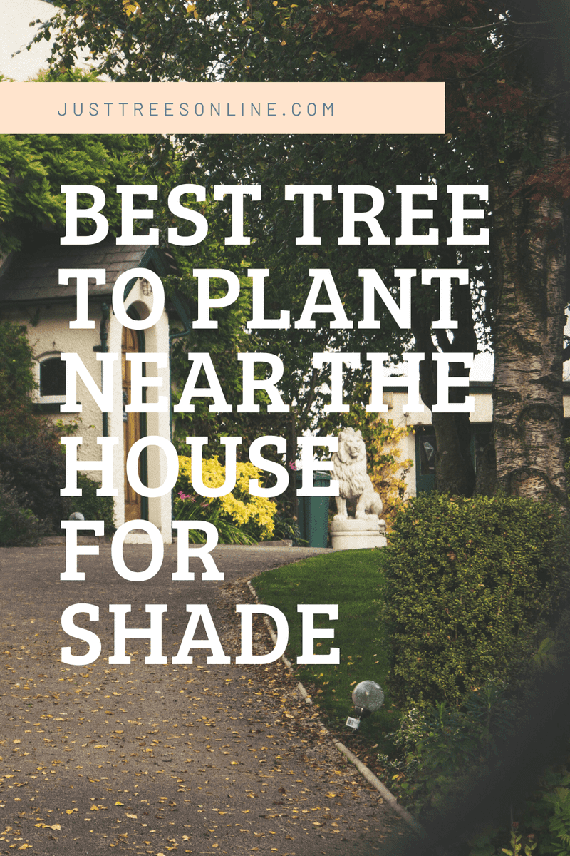 Best Trees To Plant Near The House For Shade