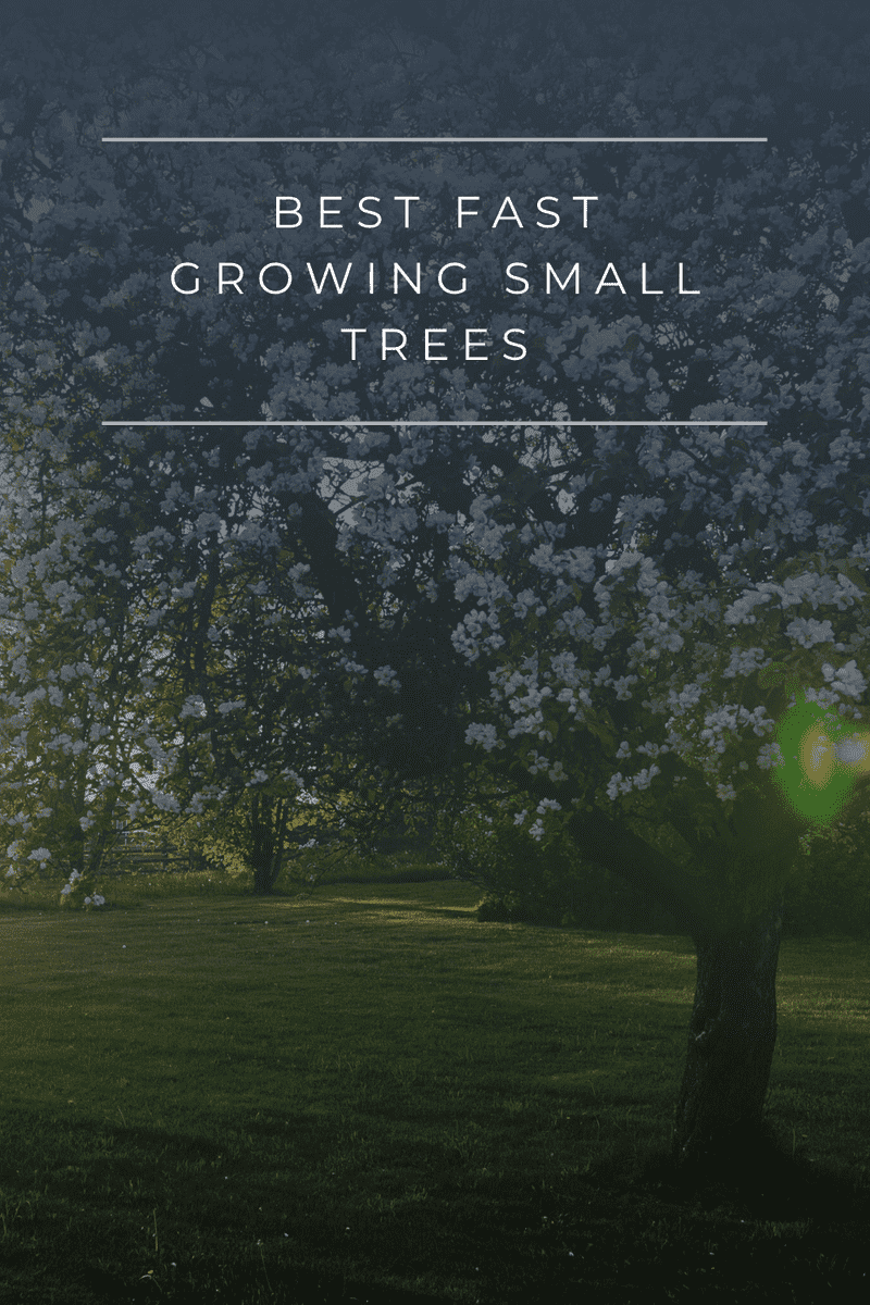 The Best Fast Growing Small Trees You Can Buy