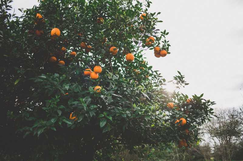 Best Fruit Trees For Cold Climates