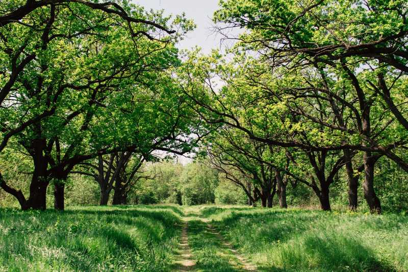 The Top 6 Fast Growing Oak Trees That Stay Healthy
