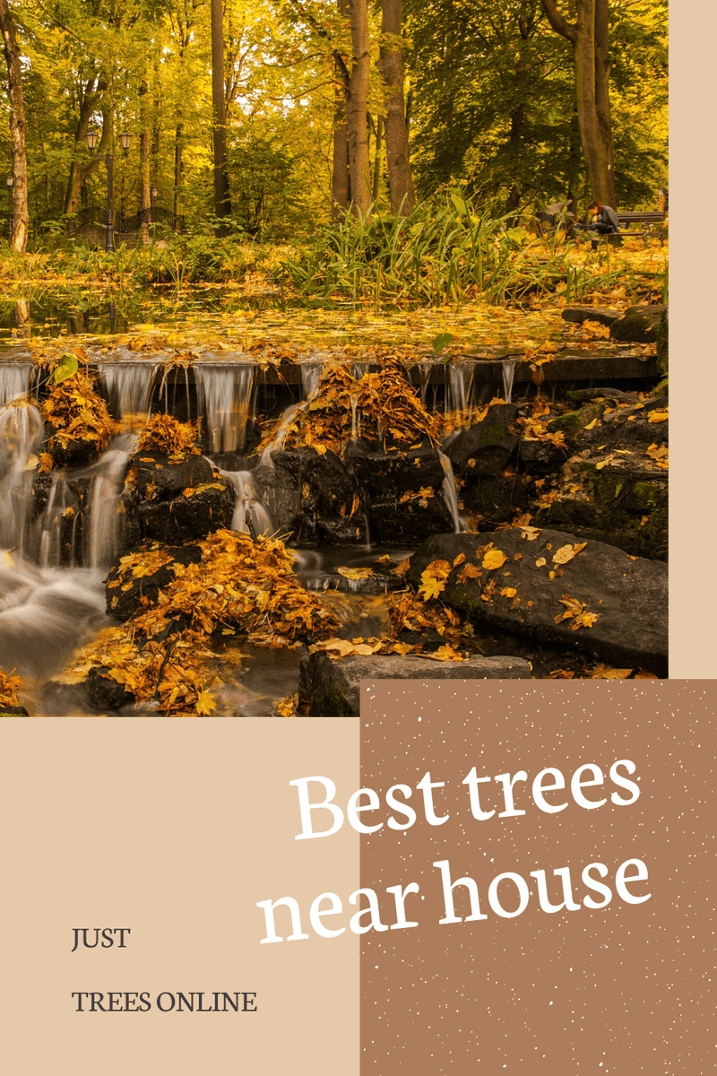 The 11 Best Trees To Plant Near The House