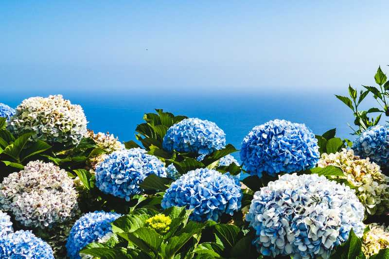 The Best Hydrangea Trees And Bushes To Buy